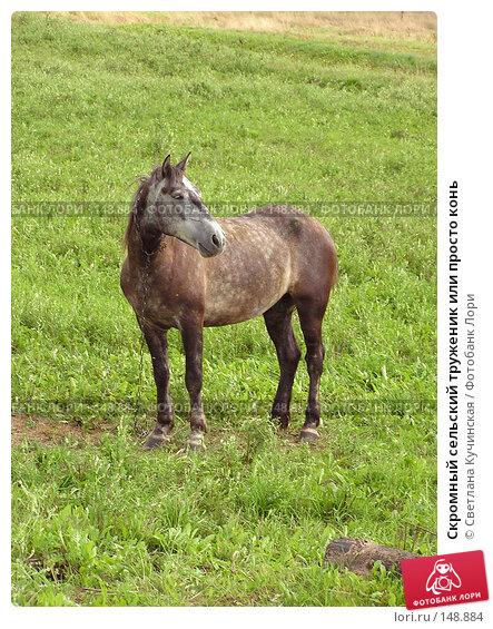 Скромный сельский труженик или просто конь, фото № 148884, снято 29 марта 2017 г. (c) Светлана Кучинская / Фотобанк Лори