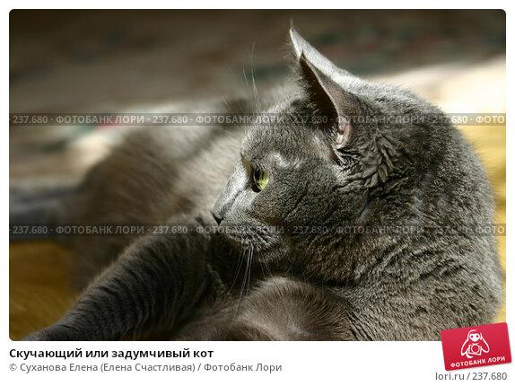 Скучающий или задумчивый кот, фото № 237680, снято 30 марта 2008 г. (c) Суханова Елена (Елена Счастливая) / Фотобанк Лори
