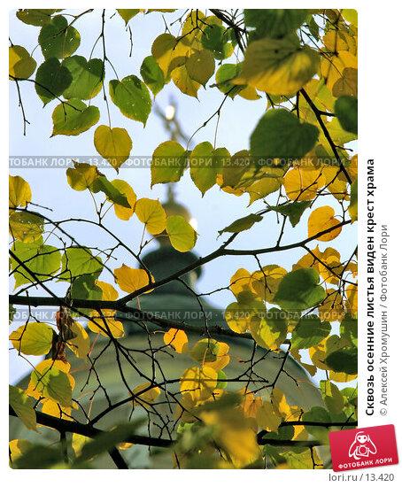 Купить «Сквозь осенние листья виден крест храма», фото № 13420, снято 28 сентября 2006 г. (c) Алексей Хромушин / Фотобанк Лори