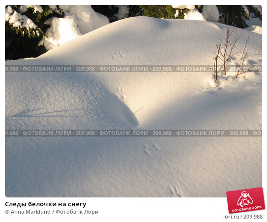 Следы белочки на снегу, фото № 209988, снято 17 февраля 2008 г. (c) Anna Marklund / Фотобанк Лори