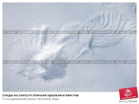 Купить «Следы на снегу от птичьих крыльев и хвостов», фото № 99604, снято 30 января 2007 г. (c) Солодовникова Елена / Фотобанк Лори