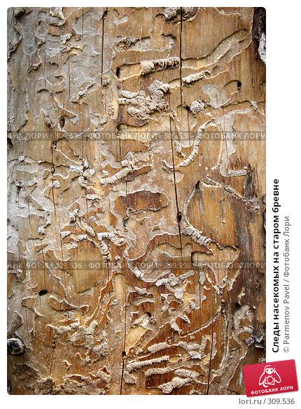 Следы насекомых на старом бревне, фото № 309536, снято 18 января 2017 г. (c) Parmenov Pavel / Фотобанк Лори