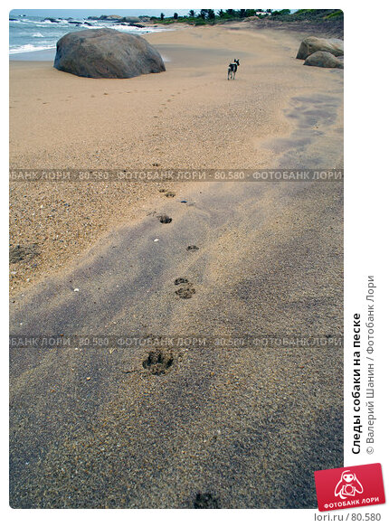 Следы собаки на песке, фото № 80580, снято 16 июня 2007 г. (c) Валерий Шанин / Фотобанк Лори
