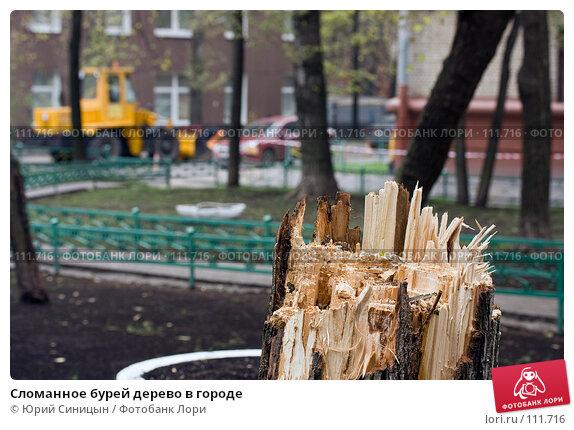 Сломанное бурей дерево в городе, фото № 111716, снято 22 октября 2007 г. (c) Юрий Синицын / Фотобанк Лори