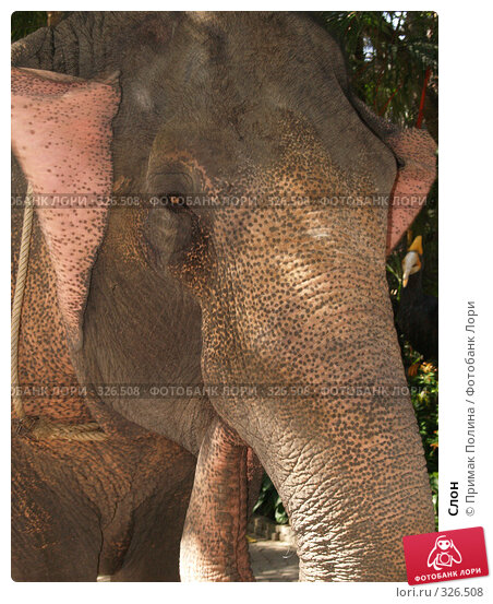 Слон, фото № 326508, снято 13 августа 2007 г. (c) Примак Полина / Фотобанк Лори