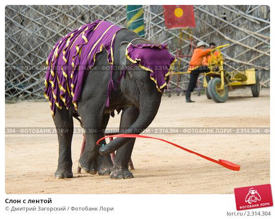 Слон с лентой. Стоковое фото, фотограф Дмитрий Загорский / Фотобанк Лори