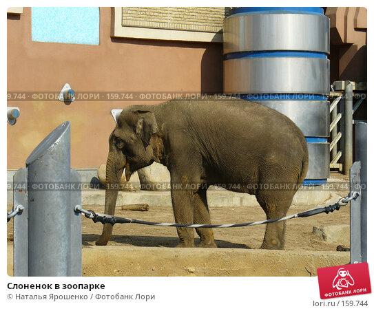 Слоненок в зоопарке, фото № 159744, снято 4 мая 2006 г. (c) Наталья Ярошенко / Фотобанк Лори