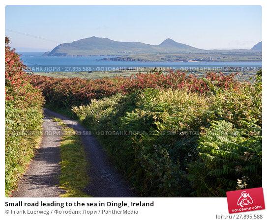 Купить «Small road leading to the sea in Dingle, Ireland», фото № 27895588, снято 26 апреля 2019 г. (c) PantherMedia / Фотобанк Лори