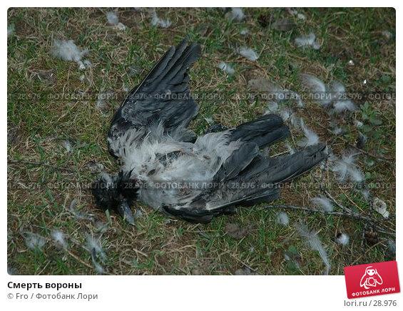 Смерть вороны, фото № 28976, снято 1 апреля 2007 г. (c) Fro / Фотобанк Лори