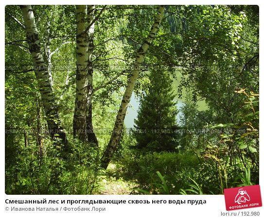 Смешанный лес и проглядывающие сквозь него воды пруда, фото № 192980, снято 14 августа 2006 г. (c) Иванова Наталья / Фотобанк Лори