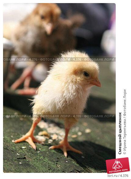 Смешной цыпленок, эксклюзивное фото № 4376, снято 8 мая 2006 г. (c) Ирина Терентьева / Фотобанк Лори