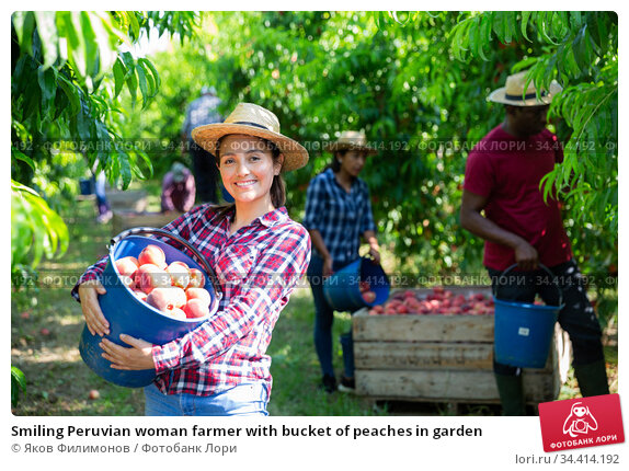 Smiling Peruvian woman farmer with bucket of peaches in garden. Стоковое фото, фотограф Яков Филимонов / Фотобанк Лори