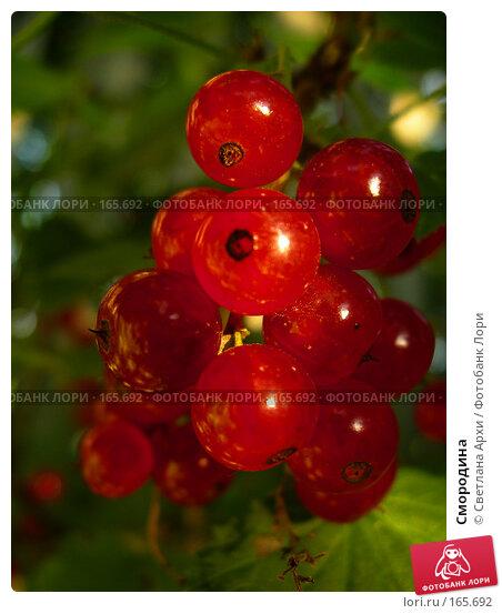 Смородина, фото № 165692, снято 20 августа 2005 г. (c) Светлана Архи / Фотобанк Лори
