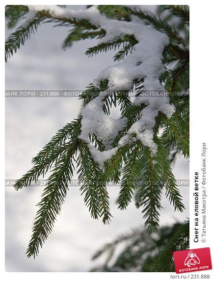 Снег на еловой ветке, фото № 231888, снято 14 февраля 2008 г. (c) Татьяна Макотра / Фотобанк Лори