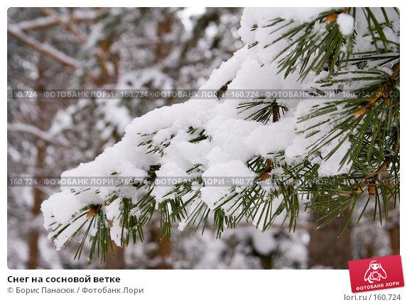 Снег на сосновой ветке, фото № 160724, снято 14 декабря 2007 г. (c) Борис Панасюк / Фотобанк Лори