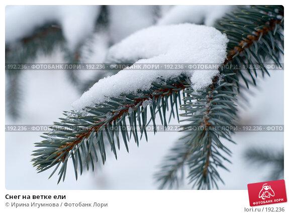 Снег на ветке ели, фото № 192236, снято 19 декабря 2007 г. (c) Ирина Игумнова / Фотобанк Лори