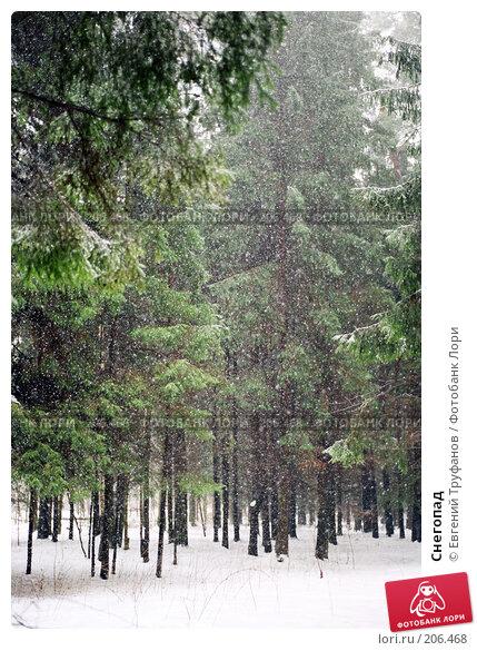 Снегопад, фото № 206468, снято 27 июня 2017 г. (c) Евгений Труфанов / Фотобанк Лори