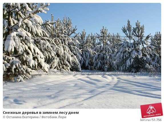 Снежные деревья в зимнем лесу днем, фото № 51756, снято 29 ноября 2006 г. (c) Останина Екатерина / Фотобанк Лори