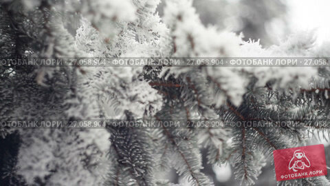 Купить «Snow-covered branch of a pine in winter park. Christmas background», видеоролик № 27058904, снято 5 октября 2017 г. (c) Happy Letters / Фотобанк Лори