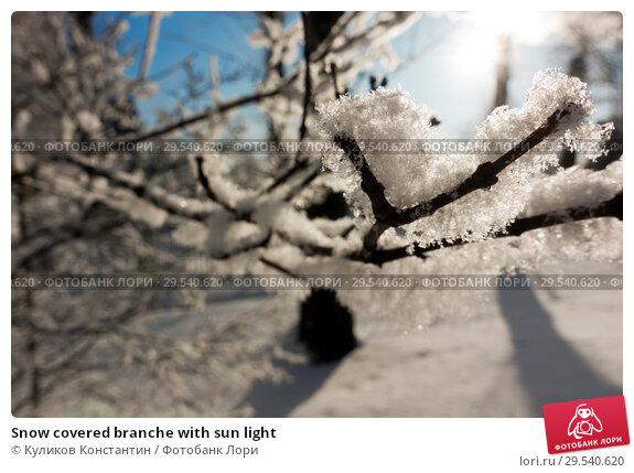 Купить «Snow covered branche with sun light», фото № 29540620, снято 22 февраля 2018 г. (c) Куликов Константин / Фотобанк Лори