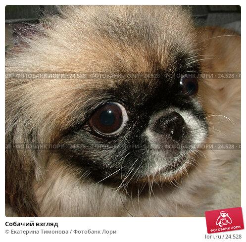 Собачий взгляд, фото № 24528, снято 29 мая 2017 г. (c) Екатерина Тимонова / Фотобанк Лори