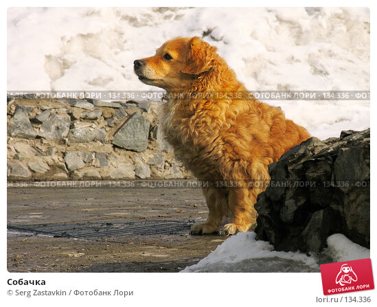 Собачка, фото № 134336, снято 20 марта 2005 г. (c) Serg Zastavkin / Фотобанк Лори