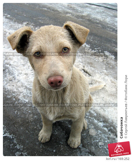 Собачонка, фото № 169252, снято 21 ноября 2003 г. (c) Сергей Лаврентьев / Фотобанк Лори