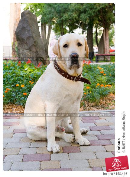 Собака, фото № 158416, снято 12 июня 2007 г. (c) BART / Фотобанк Лори