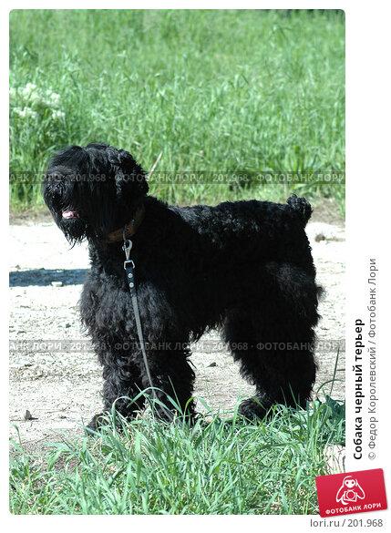 Собака черный терьер, фото № 201968, снято 15 мая 2005 г. (c) Федор Королевский / Фотобанк Лори