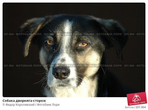 Купить «Собака дворняга-сторож», фото № 201964, снято 9 мая 2005 г. (c) Федор Королевский / Фотобанк Лори