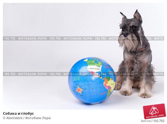 Собака и глобус, фото № 192792, снято 3 декабря 2016 г. (c) AlexValent / Фотобанк Лори