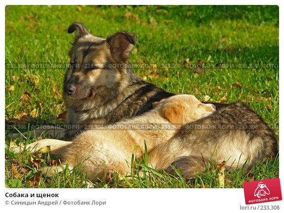Собака и щенок, фото № 233308, снято 27 сентября 2006 г. (c) Синицын Андрей / Фотобанк Лори