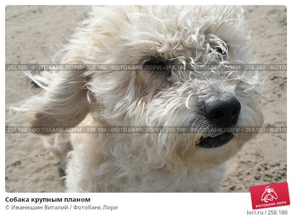 Собака крупным планом, фото № 258180, снято 28 мая 2017 г. (c) Иванюшин Виталий / Фотобанк Лори