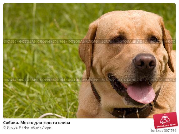 Собака. Место для текста слева, фото № 307764, снято 1 июня 2008 г. (c) Игорь Р / Фотобанк Лори