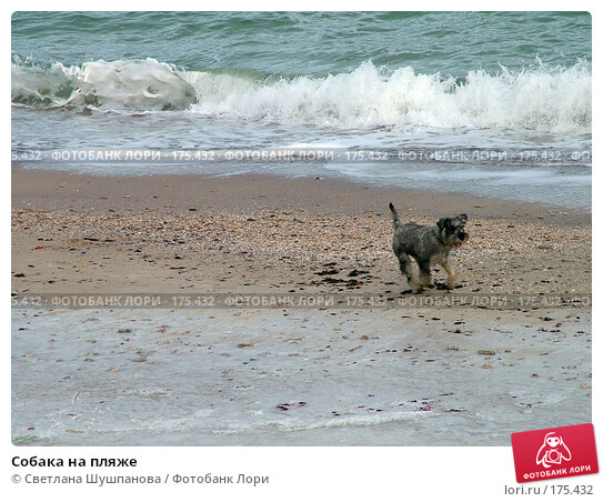 Собака на пляже, фото № 175432, снято 8 января 2006 г. (c) Светлана Шушпанова / Фотобанк Лори