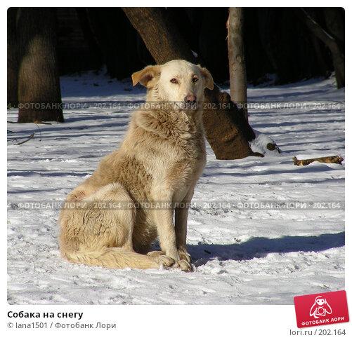Купить «Собака на снегу», эксклюзивное фото № 202164, снято 14 февраля 2008 г. (c) lana1501 / Фотобанк Лори