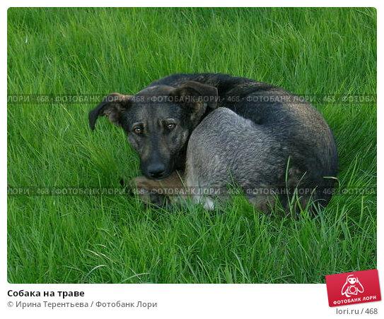 Собака на траве, эксклюзивное фото № 468, снято 22 мая 2004 г. (c) Ирина Терентьева / Фотобанк Лори