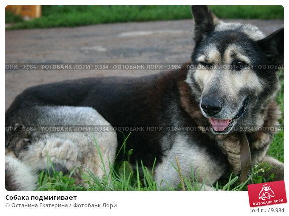 Собака подмигивает, фото № 9984, снято 4 августа 2005 г. (c) Останина Екатерина / Фотобанк Лори