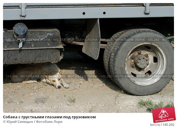 Собака с грустными глазами под грузовиком, фото № 145292, снято 7 сентября 2007 г. (c) Юрий Синицын / Фотобанк Лори