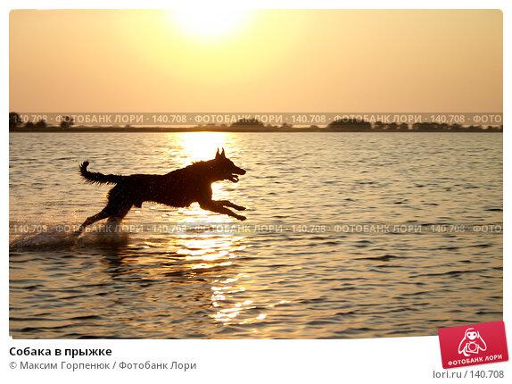 Собака в прыжке, фото № 140708, снято 16 сентября 2006 г. (c) Максим Горпенюк / Фотобанк Лори