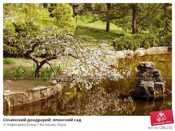 Сочинский дендрарий, японский сад, фото № 246272, снято 24 марта 2008 г. (c) Лифанцева Елена / Фотобанк Лори