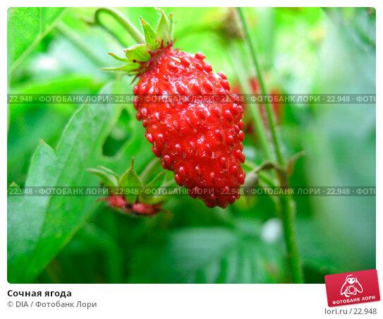 Сочная ягода, фото № 22948, снято 28 мая 2017 г. (c) DIA / Фотобанк Лори