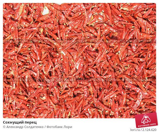 Купить «Сохнущий перец», фото № 2124620, снято 15 февраля 2010 г. (c) Александр Солдатенко / Фотобанк Лори