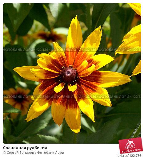 Солнечная рудбекия, фото № 122736, снято 21 июля 2007 г. (c) Сергей Бочаров / Фотобанк Лори