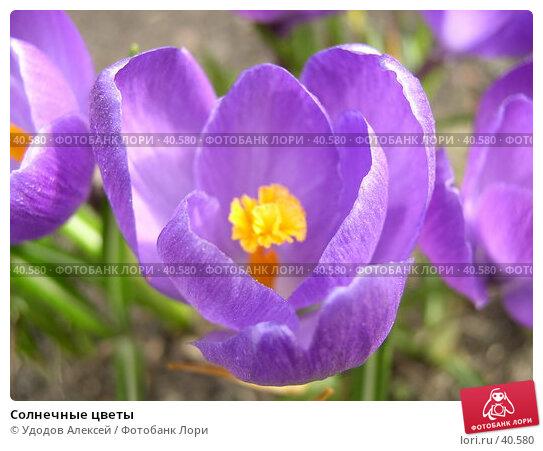 Солнечные цветы, фото № 40580, снято 18 апреля 2007 г. (c) Удодов Алексей / Фотобанк Лори