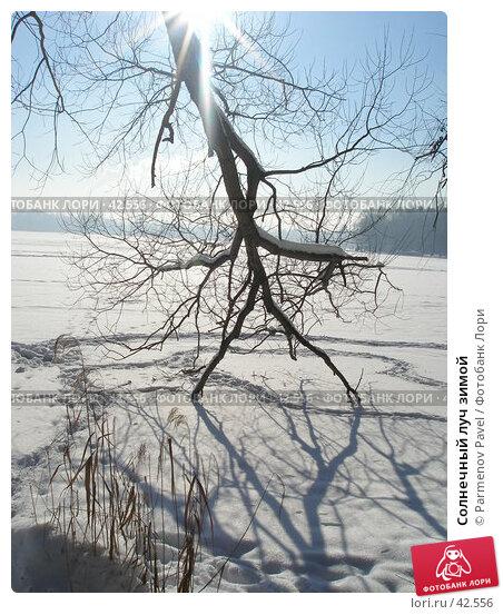 Солнечный луч зимой, фото № 42556, снято 12 февраля 2007 г. (c) Parmenov Pavel / Фотобанк Лори