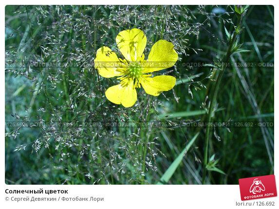 Солнечный цветок, фото № 126692, снято 8 июля 2007 г. (c) Сергей Девяткин / Фотобанк Лори