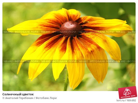 Купить «Солнечный цветок», фото № 169692, снято 21 июля 2007 г. (c) Анатолий Теребенин / Фотобанк Лори