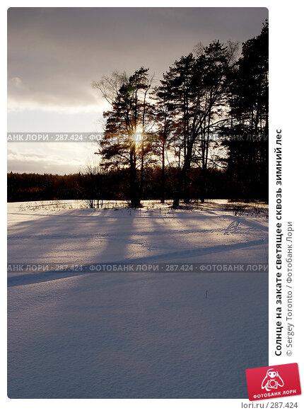 Солнце на закате светящее сквозь зимний лес, фото № 287424, снято 27 января 2008 г. (c) Sergey Toronto / Фотобанк Лори