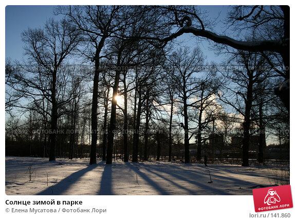 Солнце зимой в парке, фото № 141860, снято 14 декабря 2005 г. (c) Елена Мусатова / Фотобанк Лори